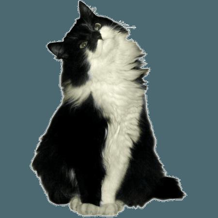 black white png filler cat