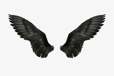 black wings filler png feather dark aesthetic