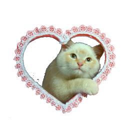 pastel kitten