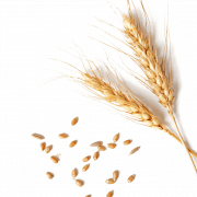 Wheat PNG Image | PNG All