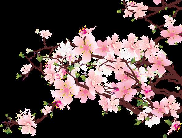 cherry blossom - Google Search
