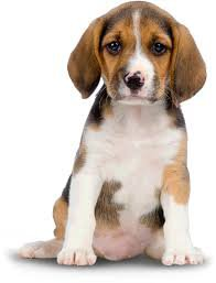 dog png - Google Search