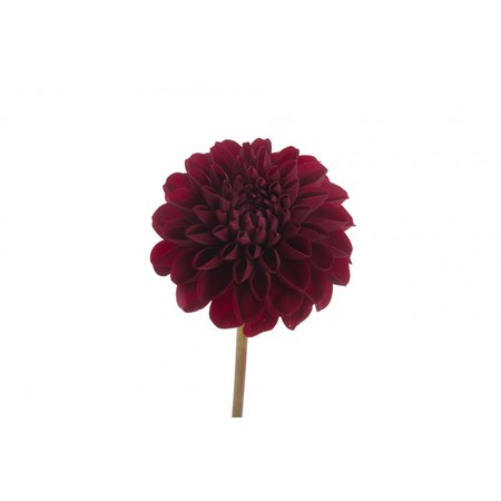 dark red flower - Google Search