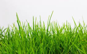 grass - Google Search
