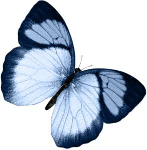 blue butterfly png filler