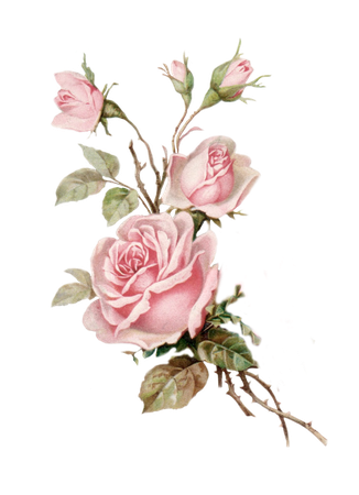 pink roses border - Google Search