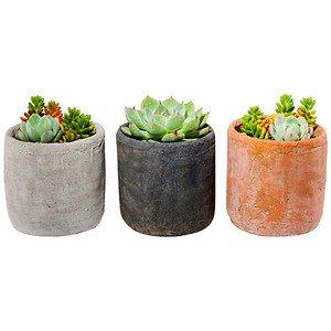 """5"""" Succulent Arrangement Trio Kit Seeds & Growing Kits - Sho... - Polyvore"""