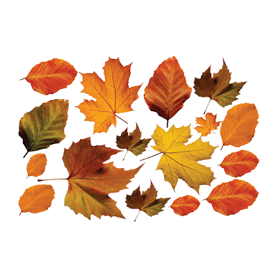 Autumn Leaves Wall Mural Decal - Seasonal Wall Decal Murals - Primedecals