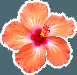 orange-hibiscus-sticker-1541183856.046374.png (250×243)