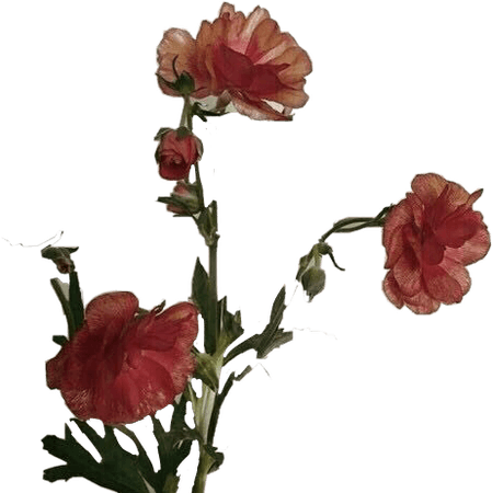 grunge aesthetic png flower