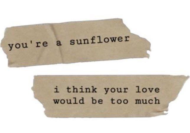 sunflower - starpocalypse