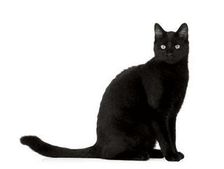 black cat filler png - Google Search