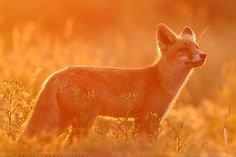 Pinterest (kira yukimura aesthetic orange) (74)