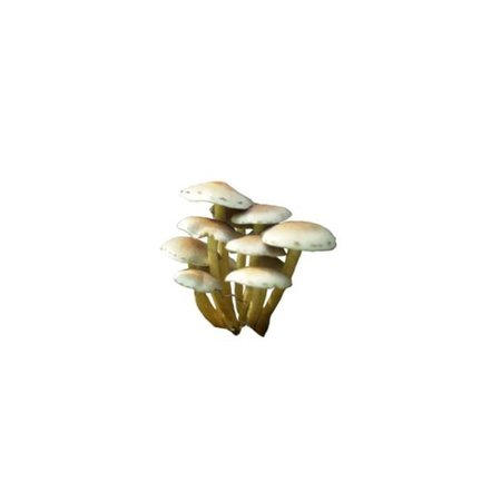 brown white mushroom png filler