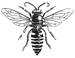 bee drawing - Google Search