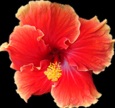 polyvore tropical: 10 000 images trouvées dans Yandex.Pictures