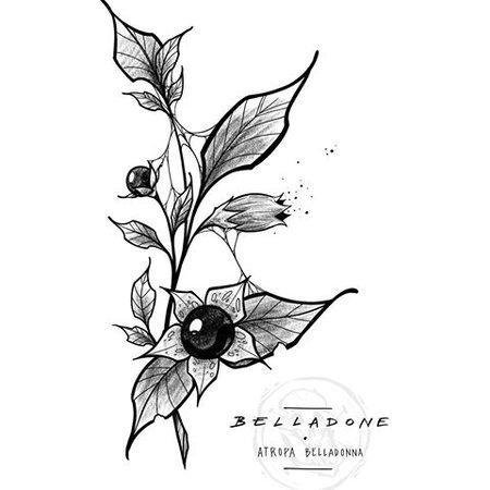 nightshade flower drawing art filler botany