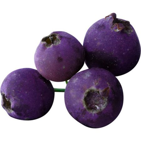 purple berries png filler