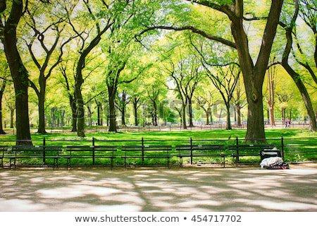 park ny backgound - Buscar con Google