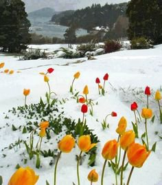 (33) Pinterest - Five Places to See Snowfall in this Winter | Winter in Bariloche - Argentina | Kış @ Winter