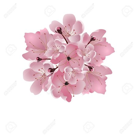 japanese pink flowers - Google Search
