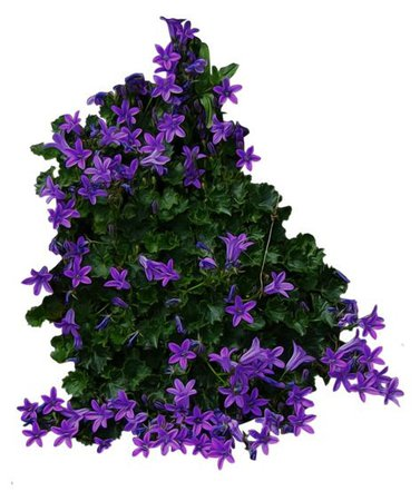 green purple flower png filler garden mood