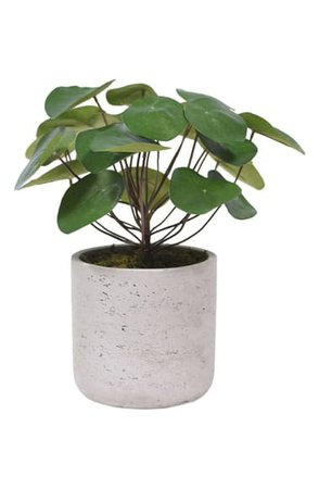 Bloomr Pancake Plant Planter Decoration | Nordstrom