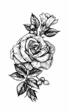Tumbrl Flower Drawing