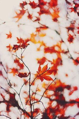 autumn fall aesthetic