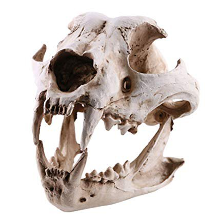 Dog Skull Taxidermy Supplies Art Bone Medicine Home Decor: Amazon.ca: Home & Kitchen