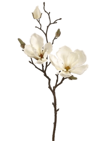 White Flower pngs