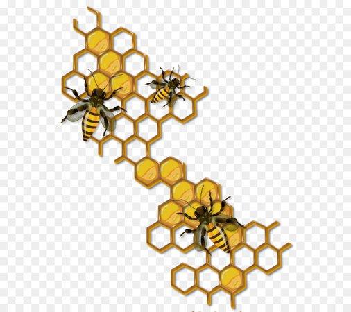 Honey bee Beehive Drawing