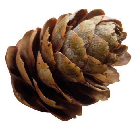 brown filler