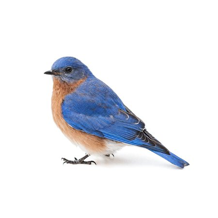 Eastern Bluebird Photograph by Leslie Banks