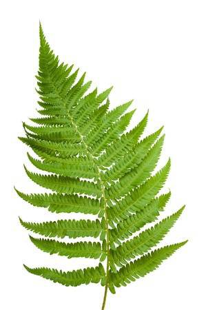 Ferns Branch