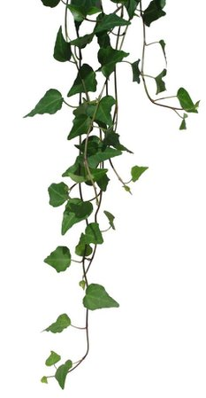 green leaf vine png filler garden mood