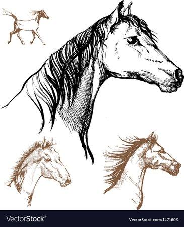 Horses Royalty Free Vector Image - VectorStock