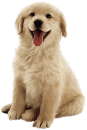 Animals Png 2018 New Collection For Editing Picsart and Photoshop – S.R. Editing Zone
