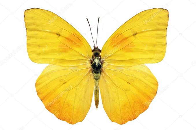 butterfly png - Pesquisa Google