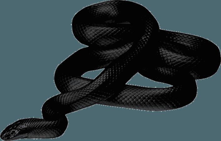 snake transparent