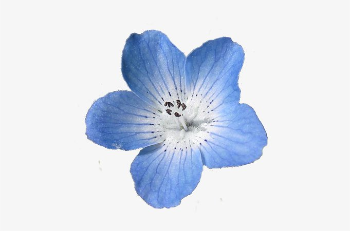 Blue Flowers Png Tumblr - Blue Aesthetic Flower Png PNG Image | Transparent PNG Free Download on SeekPNG