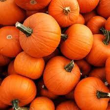 pumpkin - Google Search