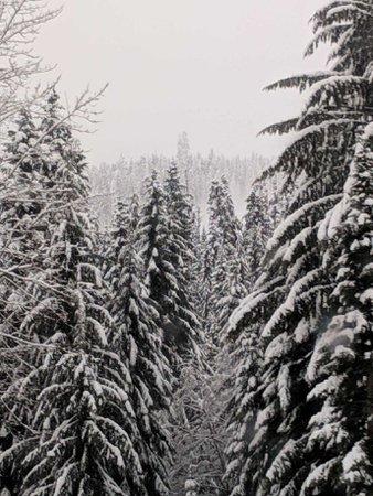 snow capes