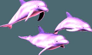 Dolphins vaporwave