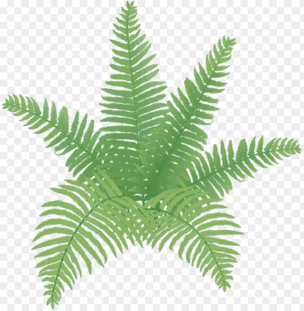 plant drawings - Google Search