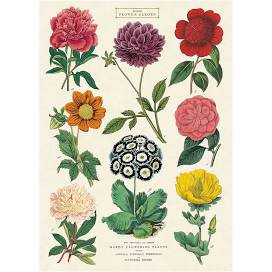 british flower garden print poster - Google Search