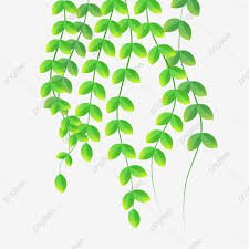 lime green vine png - Google Search