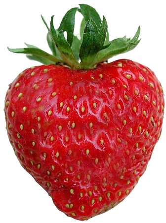 strawberries no background - Google Search