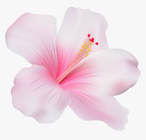 117-1174140_pink-hibiscus-png-clip-art-pink-hibiscus-flower.png (860×826)