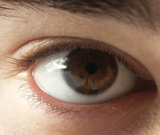 boy brown eye